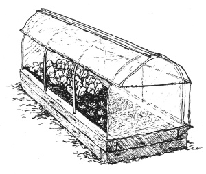 cropped greenhouse with poles-1